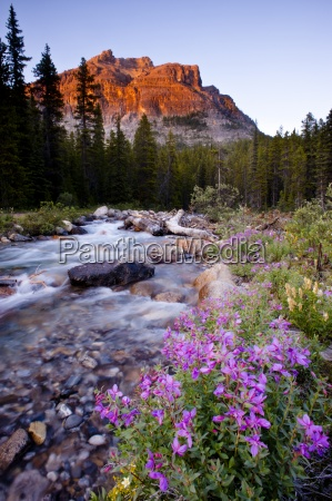 pink flowers river trees and mountain