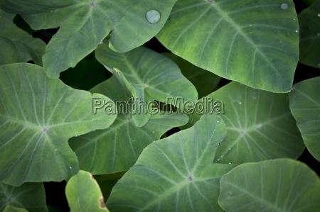 blatt baumblatt horizontal outdoor freiluft freiluftaktivitaet