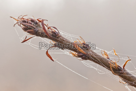 beautiful spiders web with drops at