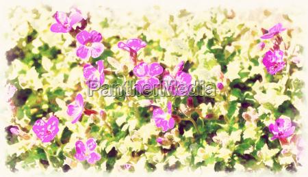 farbe garten blume pflanze gewaechs malen