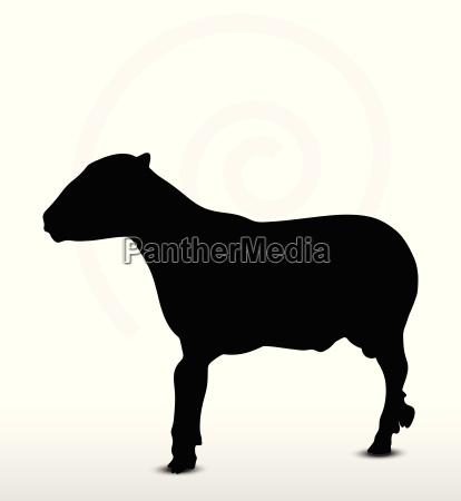schaf silhouette mit trott pose
