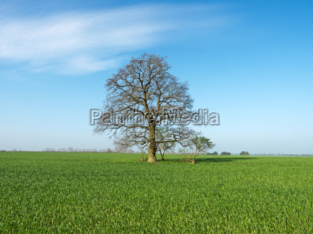 tree agriculture farming field oak spring