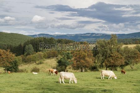 livestock pasture