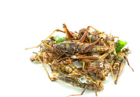 gebratene insekten regionalen koestlichkeiten lebensmittel in