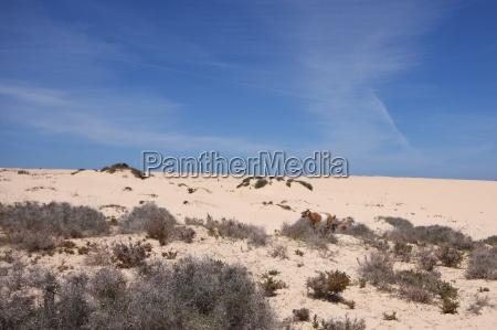Wüste, Düne, Sand , Fuerteventura, Kanaren, Wolken - 14107955