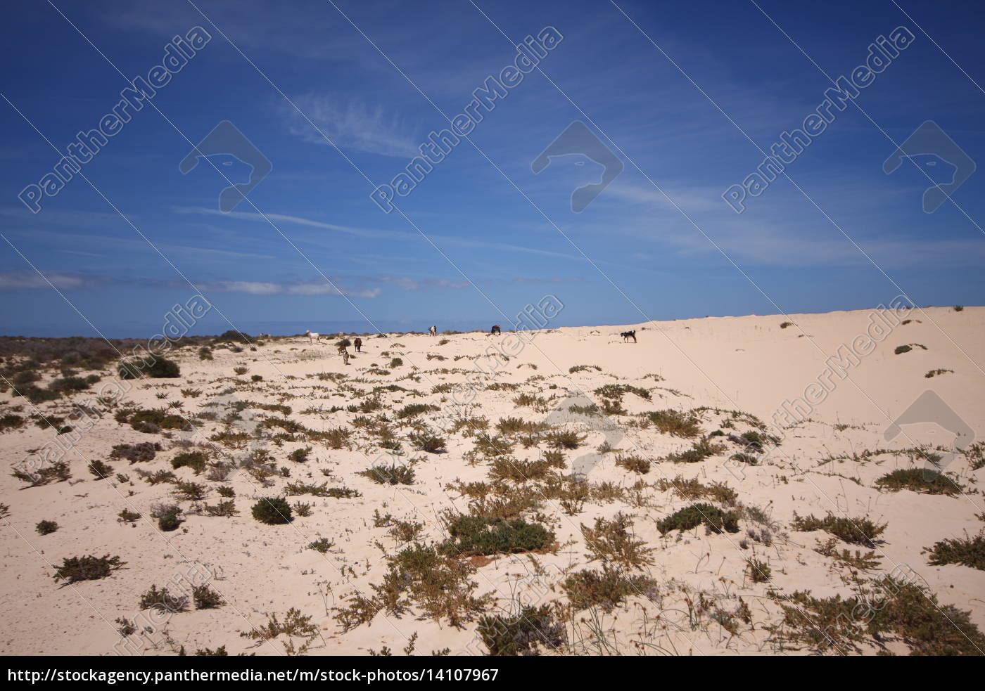 Wüste, Düne, Sand , Fuerteventura, Kanaren, Wolken - 14107967