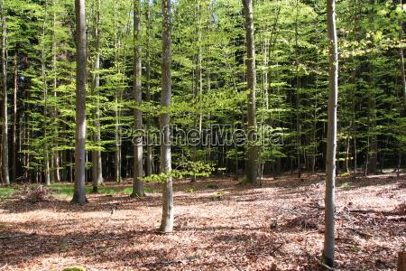 spring forest 1