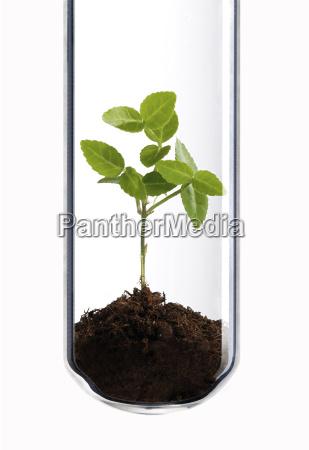 gruenpflanze im reagenzglas