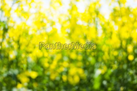 sommerlicher hintergrund in gelb und gruen