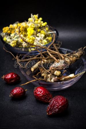 essen nahrungsmittel lebensmittel nahrung blume rose