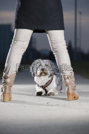 lying dog between legs of woman