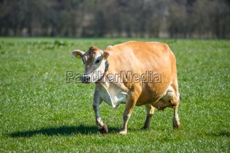 essen nahrungsmittel lebensmittel nahrung landwirtschaftlich weiblich