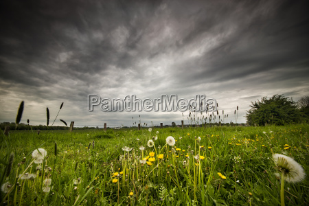 summer meadow before the storm
