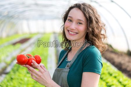 junge attraktive landwirt ernte tomaten