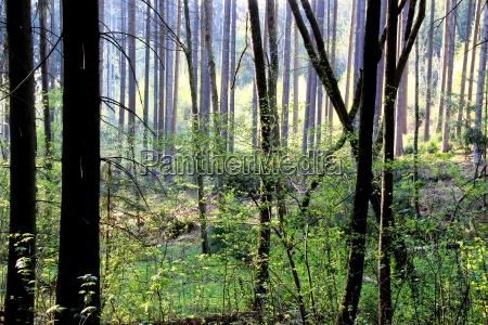 light forest in spring