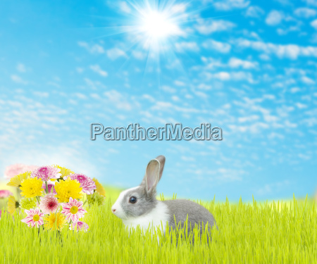 cute rabbit and beauty flower spring