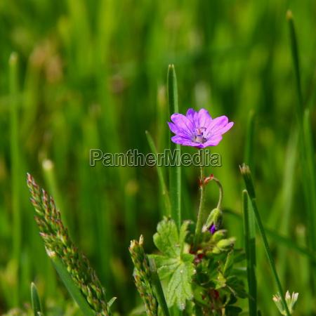 small meadow flower