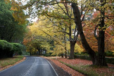 albero paesaggio natura strada alberata strada