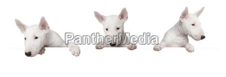 hundewelpen mit schild
