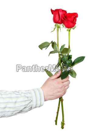 hand giving two red roses isolated