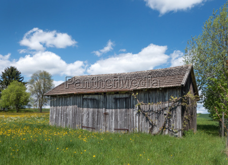 small barn in a blossoming spring