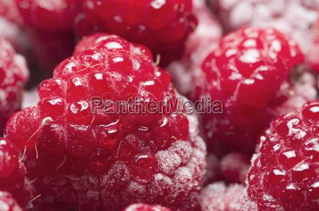 raspberry fresh closeup
