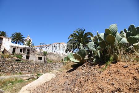 Kaktus, Kakteen, Fuerteventur, Pflanze, Pflanzen, Dornen - 14295775