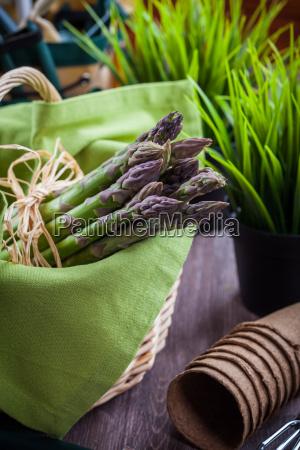 frischer gruener spargel mit garten tools