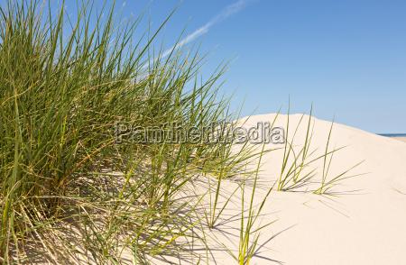 duenensand mit duenengras und blauem himmel