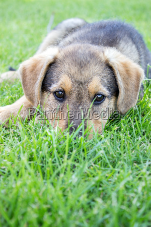 dog pet young puppy are lawn
