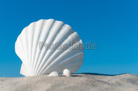 weisse muscheln an sommerlichem sandstrand unter