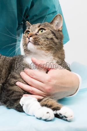 behandlung bei einer katze