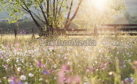 sommer-wiese, voll, mit, gänseblümchen, nach, regen - 14319425