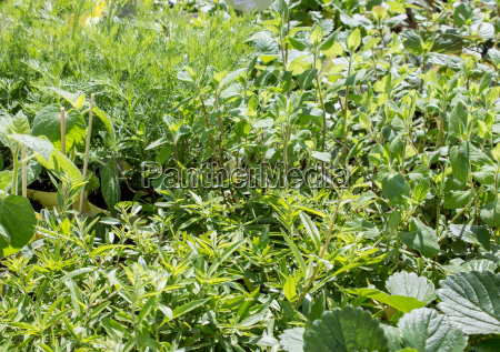 different herbs and fruit plants