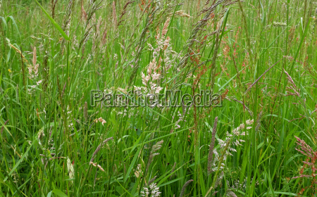 detail feld flora sommer sommerlich trockendock