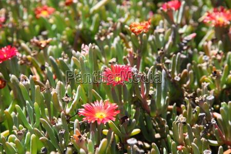 fuerteventura kanarischen inseln kanaren natur pflanze