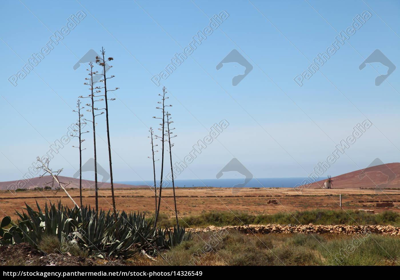 Fuerteventura, Kanarischen Inseln, Kanaren, Urlaub, Reise, Umwelt - 14326549