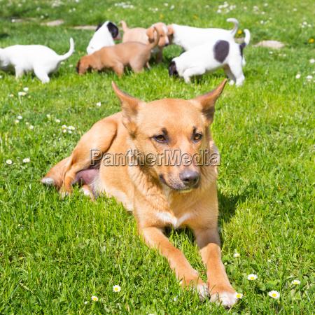 gemischte rasse niedliche kleine hundefamilie