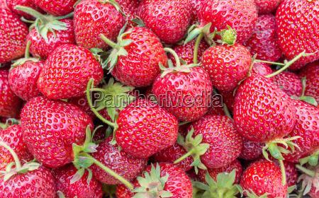 Erdbeeren, Beeren, Früchte, Obst, rot, reif - 14328695