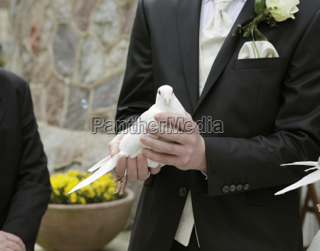groom with pigeon in hand