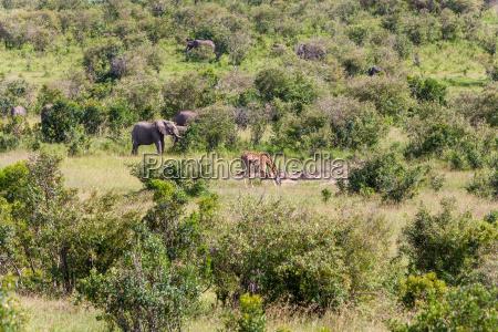 elefanten familie und giraffe zu fuss