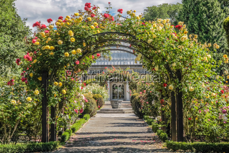 rose garden in the botanical garden