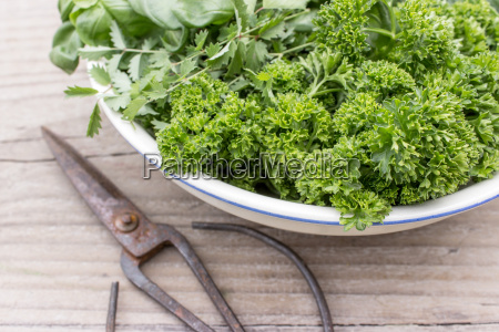 bowl with parsley basil burnet rocket