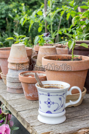 flower pots with herbs and vegetables