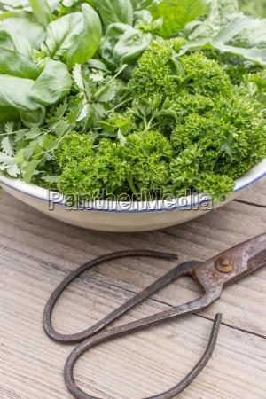 bowl, with, parsley, , basil, , burnet, , rocket - 14353911