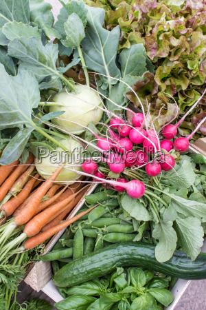 fresh turnip pea pods carrots cucumbers