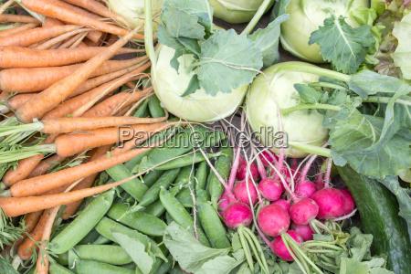 fresh kohlrabi pea pods carrots cucumbers
