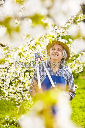 gardener lopper cherry cherry