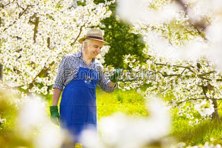gardener control gloves cherry blossom