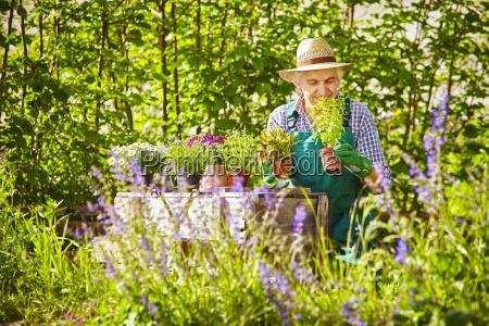 gardener straw hat plant garden smell
